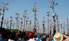 Competitors try to reach prizes in a palm tree climbing race on the 70th anniversary of Indonesia's independence.