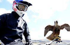 VTT de descente contre faucon : RedBull teste pour vous qui est le plus rapide dans une vidéo impressionnante