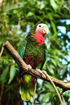#parrotcare