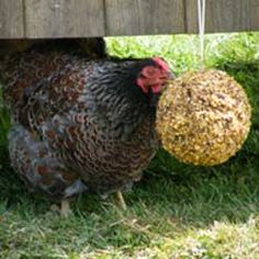 Boredom Buster® Pecking Ring | Chicken Supplies | Poultry Equipment