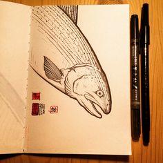 鮭・サケ・三文魚・salmon