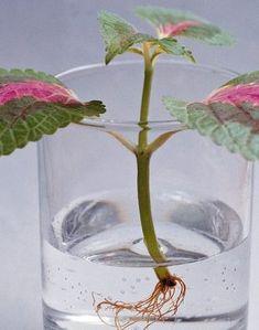 Glass Vase, Candle Holders, Candles, Garden, Tv, Decor, Garten, Decoration, Lawn And Garden