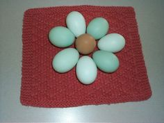 blue eggs!  Wouldn't that be fun!!