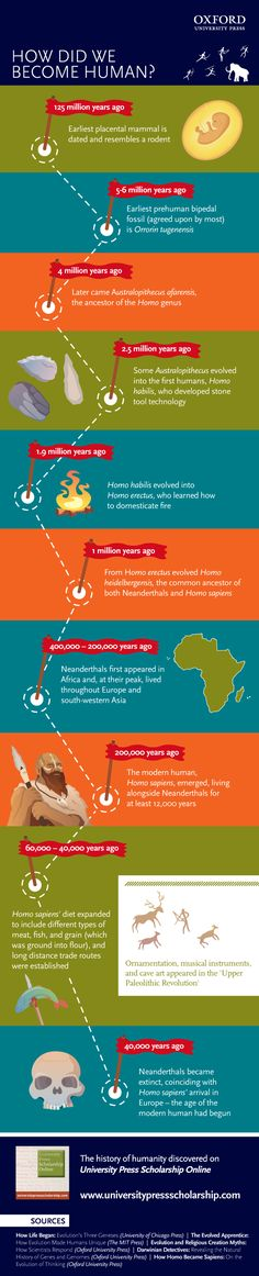 The evolution of humans [infographic]
