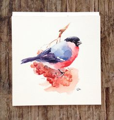Bullfinch Original Watercolor Bird Painting 7 by CMwatercolors