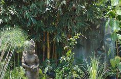 Thai Garden by Steve Lavelle, via Flickr