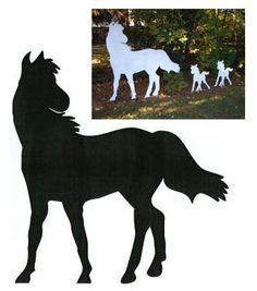 Large Horse Shadow Pattern