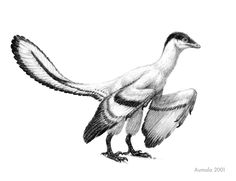 Archaeopteryx sp. by Mette Aumala, Osmatar on deviantART