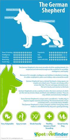 The German Shepherd ;)