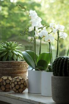 Comment entretenir une orchidée? Comment l'arroser? Où l'installer? Comment favoriser l'apparition de nouvelle fleurs? Que faire avec toutes ces racines aériennes qui sortent du pot? Si vous vous posez l'une de ces question au sujet de vos orchidées que vous aimez tant, voici toutes les réponses!!