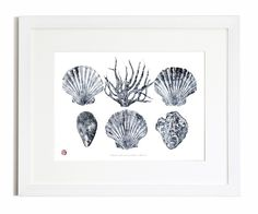 Cornish Shells And Coral Gyotaku Print