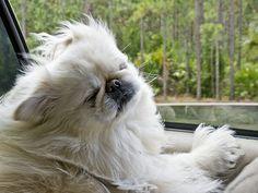 Chyna's Car Ride, Portrait, Natural by Steven Sobel, via Flickr