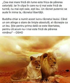 Christ In Me, I Pray, Names Of Jesus, Buddha, Lion, Give It To Me, Feng Shui, Quote, Animals
