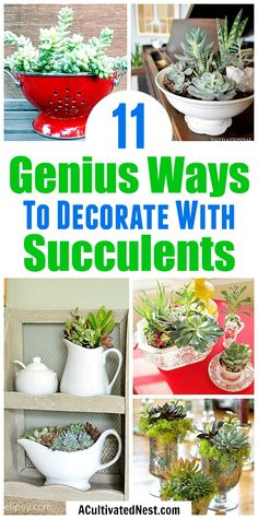 Container Ideas for Your Home 11 Beautiful Ways to Decorate With Succulents- Because succulents come in so many different shapes, sizes and colors, it's easy to decorate with them! For some clever ways to incorporate them in your home's decor, take a look Colorful Succulents, Hanging Succulents, Small Succulents, Succulents In Containers, Succulents Garden, Succulents Wallpaper, Succulents Drawing, Growing Succulents, Hanging Plants