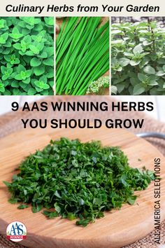 9 AAS Winning Herbs You Should Grow in Your Garden - Growing herbs in the garden is a rewarding and exciting prospect for many reasons. Herb Garden, Vegetable Garden, Best Perennials, Types Of Herbs, Thai Basil, Growing Seeds, Lilac Flowers, Organic Gardening Tips, Different Flowers