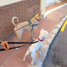 #Paseo con Avanti y Milu 01/18 #Peludos #Mascotas #Perros #Momentos #Dog #RincóndelaVictoria #ElCantal