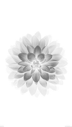 freeios8.com - ad78-apple-white-lotus-iphone6-plus-ios8-flower - http://goo.gl/Dex3Xk - iPhone, iPad, iOS8, Parallax wallpapers