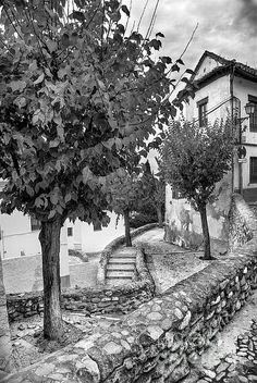 monochrome,blackandwhite,trees,tree,street,arquitecture, architectural, building, buildings, granada, spain, cities, city, monuments, urban, europe, culture, tourism, cityscape, historical, historic,old door,stairs