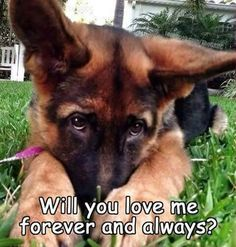 I DO!...I feel like im proposing... But I DO   I will always take care of my dog or any dog and even catsp