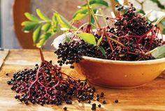 Fényes, fekete gyöngyök és az aranyat érő lekvár - A fekete bodza termése mire jó, hogyan használhatjuk fel?