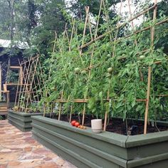 The Best Tomato Trellis & Tomato Cages ~Family Food Garden DIY Garden Yard Art When growing your own Vertical Garden Design, Herb Garden Design, Garden Trellis, Vegetable Garden, Vertical Gardens, Garden Types, Herbs Garden, Vege Garden Ideas, Trellis Fence