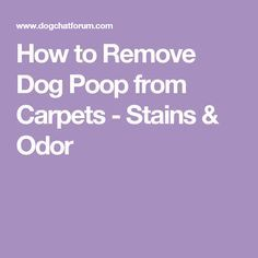How to Remove Dog Poop from Carpets - Stains & Odor