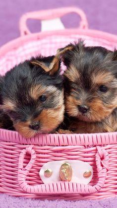 Hd Wallpaper, Cute Dogs, Teddy Bear, Puppies, Toys, Animals, Doggies, Cottage, Treats