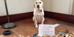 Reí sin parar XD // [FOTOS] 35 perros regañados de la forma más graciosa posible