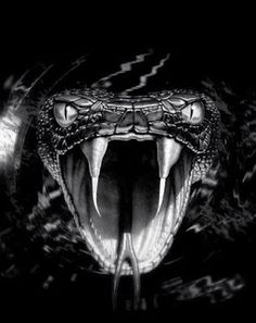 That's scary for me but unfortunately just for what I'm looking for Drachen Scary Snakes, Cool Snakes, Poisonous Snakes, Beautiful Snakes, Animals Beautiful, Kobra Tattoo, Black Mamba Snake, Regard Animal, Snake Wallpaper
