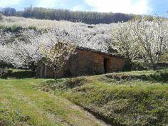 Hermosa construcción agraria rodeada de cerezos floridos.