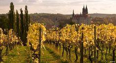 Seven Grüner Veltliner Wines to Try