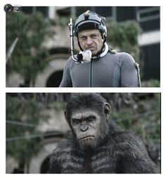 Combination of publicity photos of actor Andy Serkis in his role as Caesar in Dawn of the Planet of the Apes.
