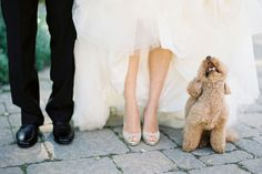 Animal Wedding Crashers- Is there anything more adorable than a four-legged friend at a wedding? Case in point: The photo above. Your pet is a member of the family, and there's lots of different ways to include them in your big day, such as bringing them to your engagement shoot.
