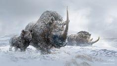 Balazs Petheo - Rinoceronte lanudo