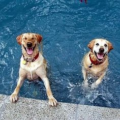 Making a splash in the pool they just love it...