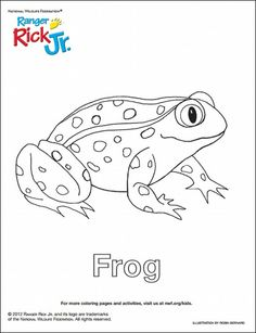 14 Best Celebrate National Frog Month with fun activities