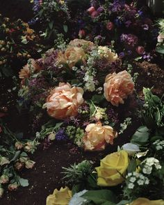 Roses - Guy Bourdin This reminds me of Wonderland.