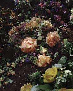 Roses - Guy Bourdin This reminds me of Wonderland. Guy Bourdin, My Flower, Beautiful Flowers, Dark Flowers, Pastel Flowers, Rose Bush, Arte Floral, Belleza Natural, Belle Photo