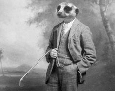 Funny Animal Photography - Meerkat in a Suit - 5x7 Print
