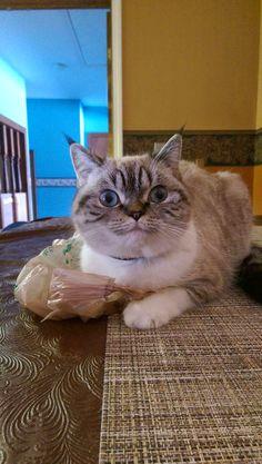 Funny cats - part 154 (40 pics + 10 gifs)