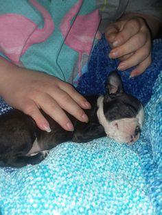 Little baby Hula puppy
