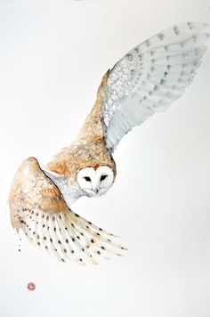 'Barn Owl' by Karl Martens