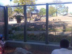 Søndermarken. Gratis udkigspost ind til Zebraer, Antiloper og giraffer i Zoologisk Have.