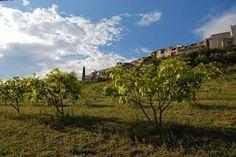 les figues de Vézénobres - Gard