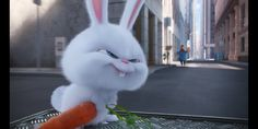 Snowball Rabbit, Cute Bunny Cartoon, Secret Life Of Pets, Cute Photos, Cute Wallpapers, Cartoon Characters, Animation, Mocha, Funny