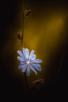 Beauty May Fade But The Light Never Will by Paul Barson on 500px