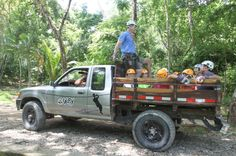 Truck ride up the hill to start tour Canopy Mal Pais del Pacifico Costa Rica : canopy mal pais - memphite.com