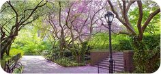 Central Park in spring, New York