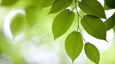 Αποτέλεσμα εικόνας για leaves green