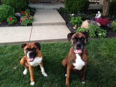 These are my dogs. I miss them. CN